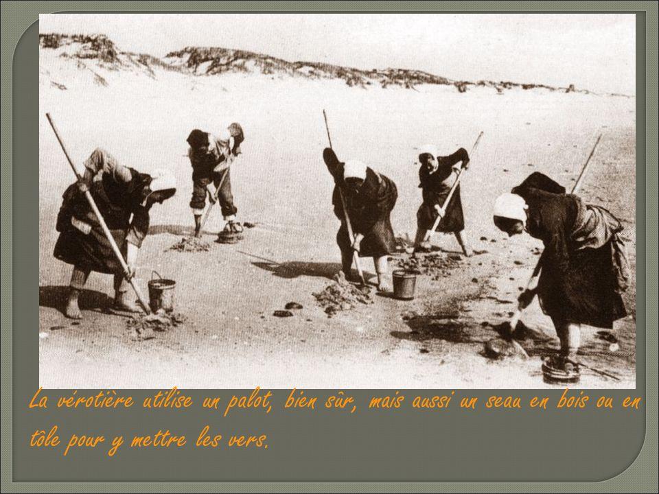 Les vérotières de métier prenaient 130 à 150 vers en deux heures. Il existe plusieurs façons de rechercher les vers. _ « Al 'crotte » : ou au tortillo