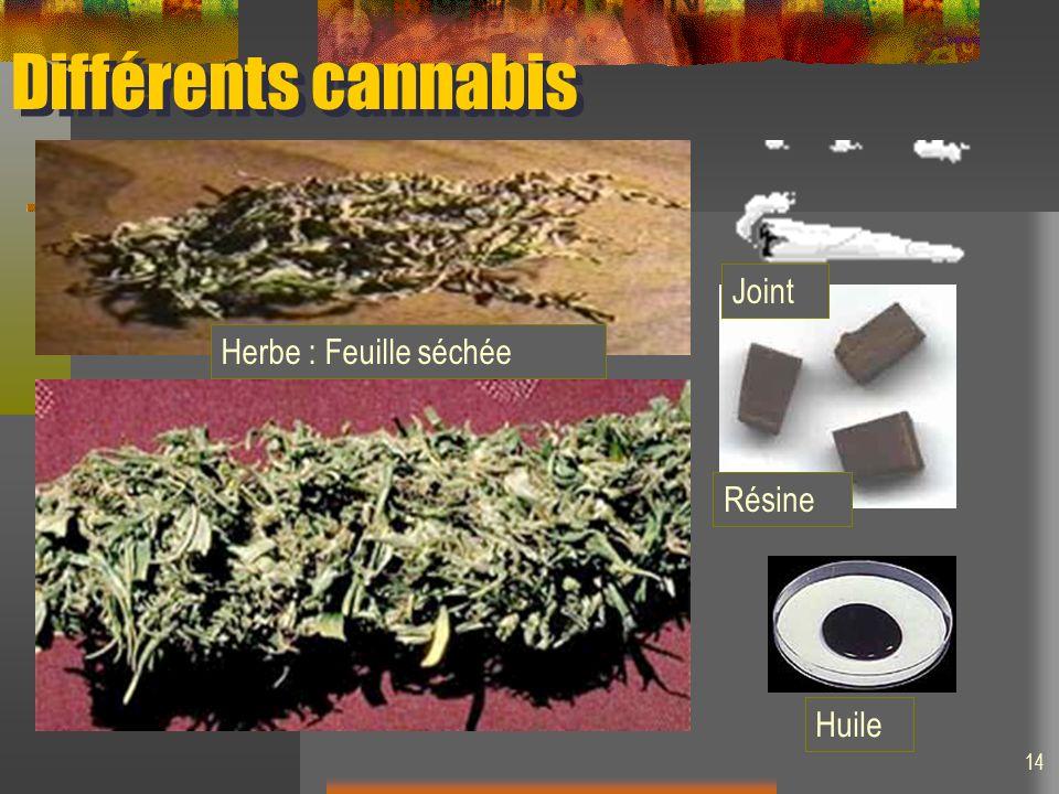 Différents cannabis Herbe : Feuille séchée Huile Résine Joint 14