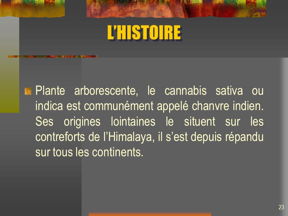 LHISTOIRE Plante arborescente, le cannabis sativa ou indica est communément appelé chanvre indien. Ses origines lointaines le situent sur les contrefo