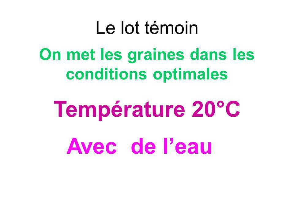 Le lot témoin On met les graines dans les conditions optimales Avec de leau Température 20°C