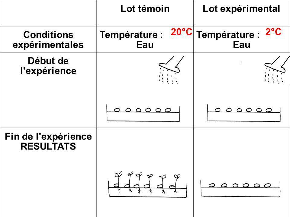 Lot témoinLot expérimental Conditions expérimentales Température : Eau Température : Eau Début de l'expérience Fin de l'expérience RESULTATS 20°C2°C
