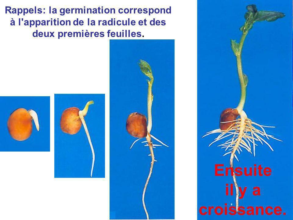 Rappels: la germination correspond à l'apparition de la radicule et des deux premières feuilles. Ensuite il y a croissance.