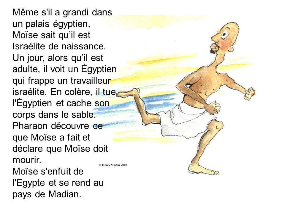 Même s il a grandi dans un palais égyptien, Moïse sait quil est Israélite de naissance.