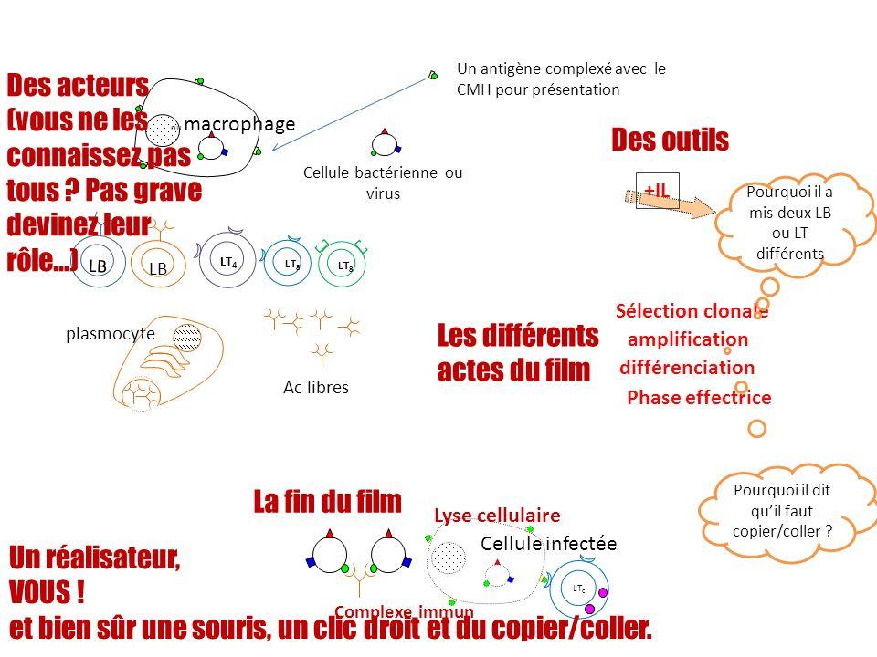ou macrophage Cellule bactérienne ou virus LB Ac libres plasmocyte LT 8 LT 4 Complexe immun +IL LT c Lyse cellulaire amplification différenciation Pha