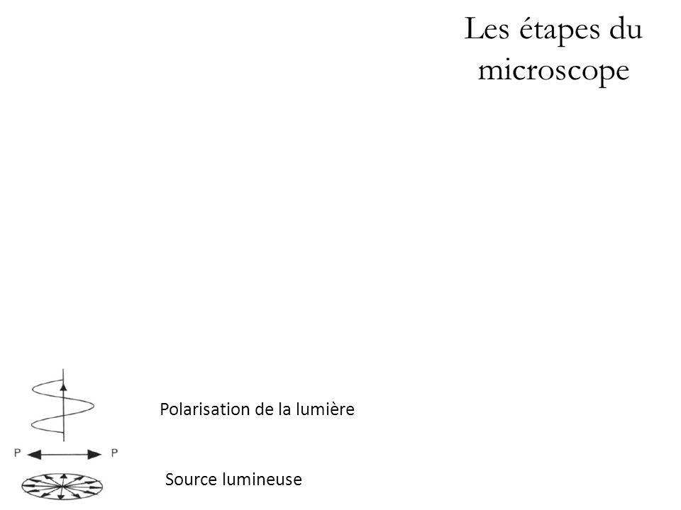 Les étapes du microscope Minéral biréfringent. Polarisation de la lumière Source lumineuse