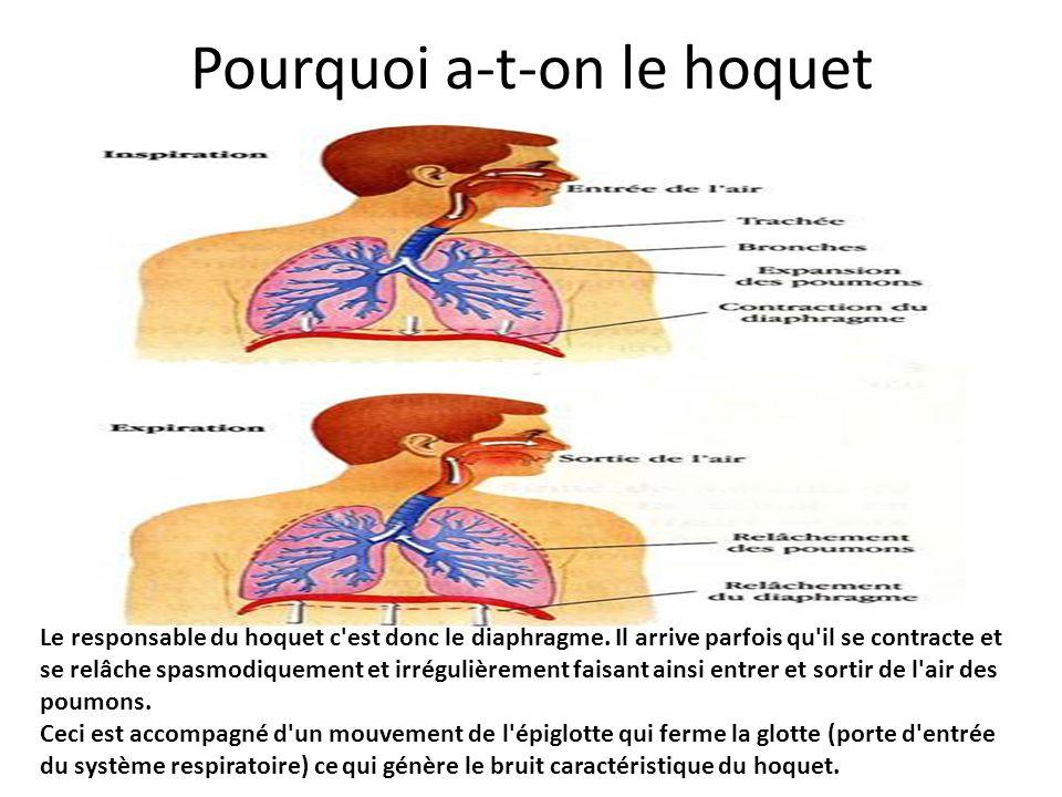Pourquoi a-t-on le hoquet Le responsable du hoquet c'est donc le diaphragme. Il arrive parfois qu'il se contracte et se relâche spasmodiquement et irr