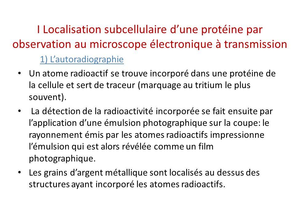 I Localisation subcellulaire dune protéine par observation au microscope électronique à transmission 1) Lautoradiographie Un atome radioactif se trouve incorporé dans une protéine de la cellule et sert de traceur (marquage au tritium le plus souvent).