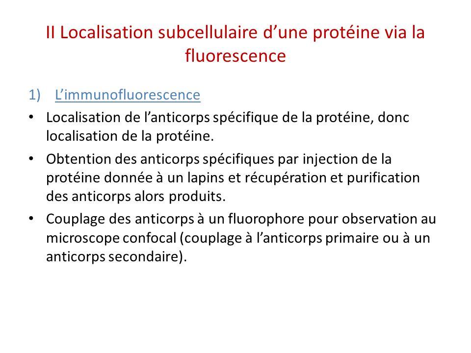 II Localisation subcellulaire dune protéine via la fluorescence 1)Limmunofluorescence Localisation de lanticorps spécifique de la protéine, donc localisation de la protéine.