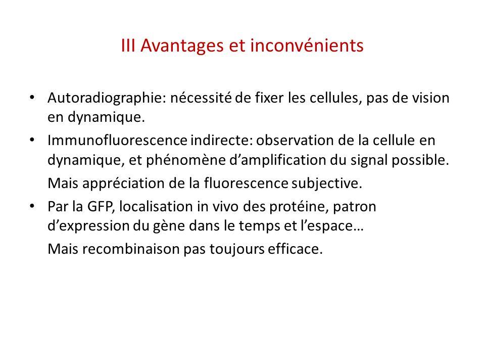 III Avantages et inconvénients Autoradiographie: nécessité de fixer les cellules, pas de vision en dynamique. Immunofluorescence indirecte: observatio