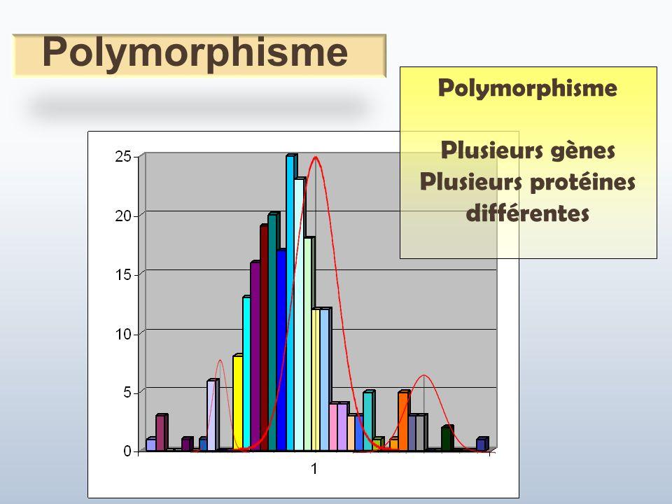Polymorphisme Plusieurs gènes Plusieurs protéines différentes