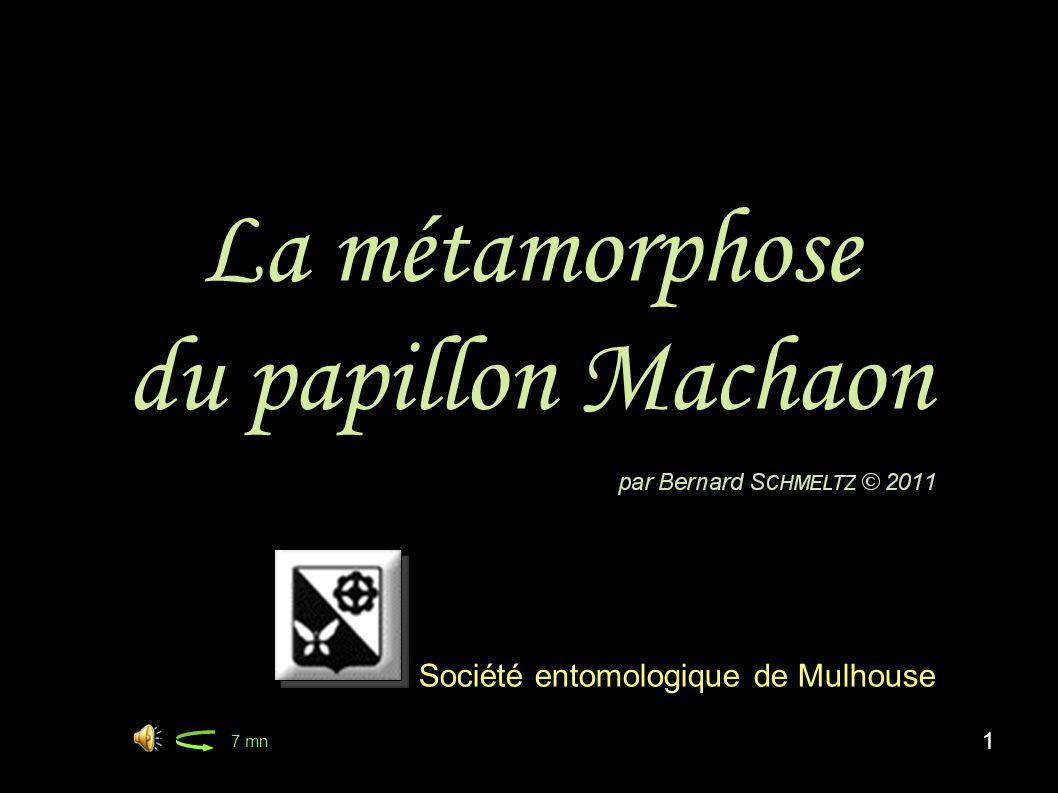 La métamorphose du papillon Machaon 1 Société entomologique de Mulhouse 7 mn