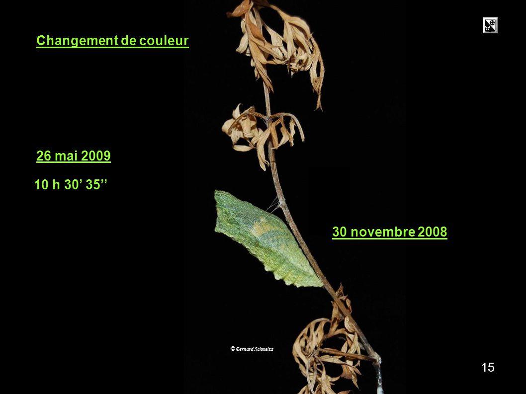 4 ème étatMétamorphose 14 3 stades De la chrysalide au papillon La chrysalide se transforme en papillon. La chrysalide Le papillon G H © Bernard Schme