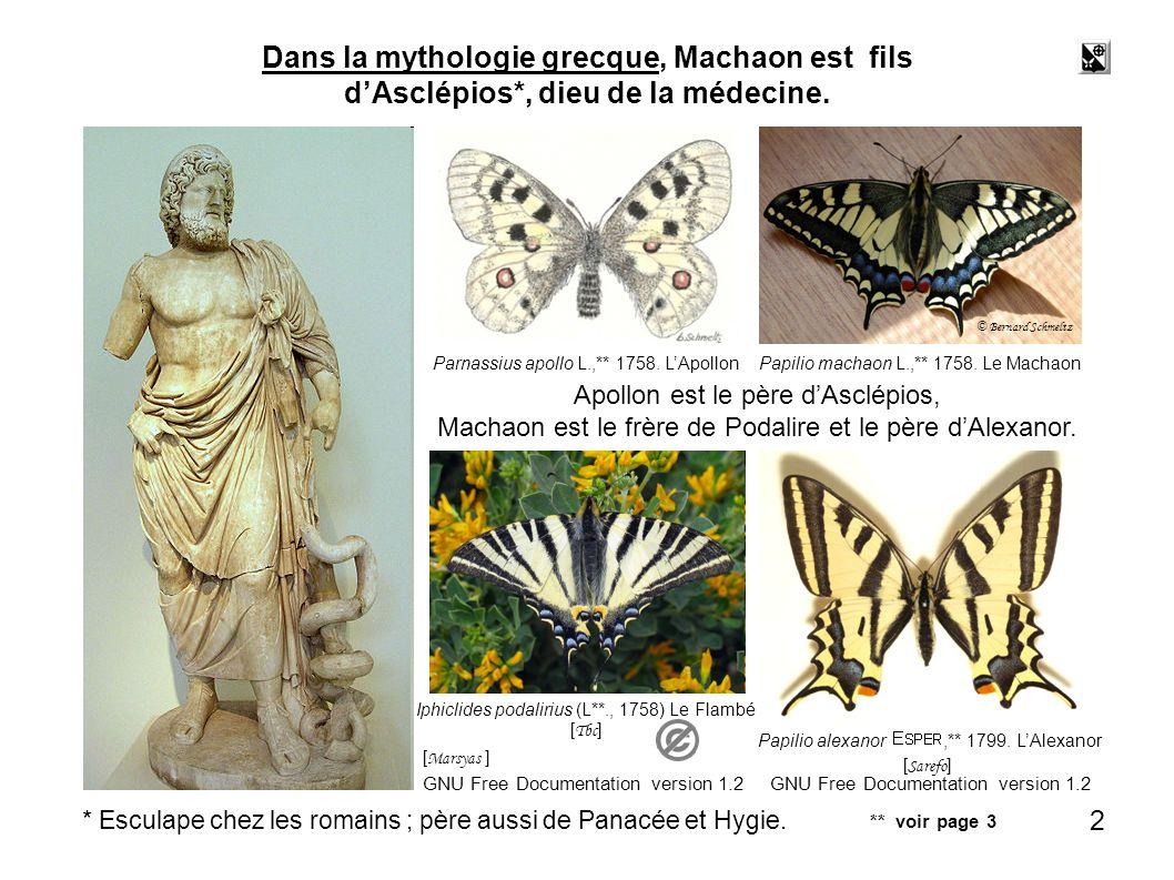 butiner 82 Le papillon butine plus de trente espèces de plantes. © Bernard Schmeltz 82