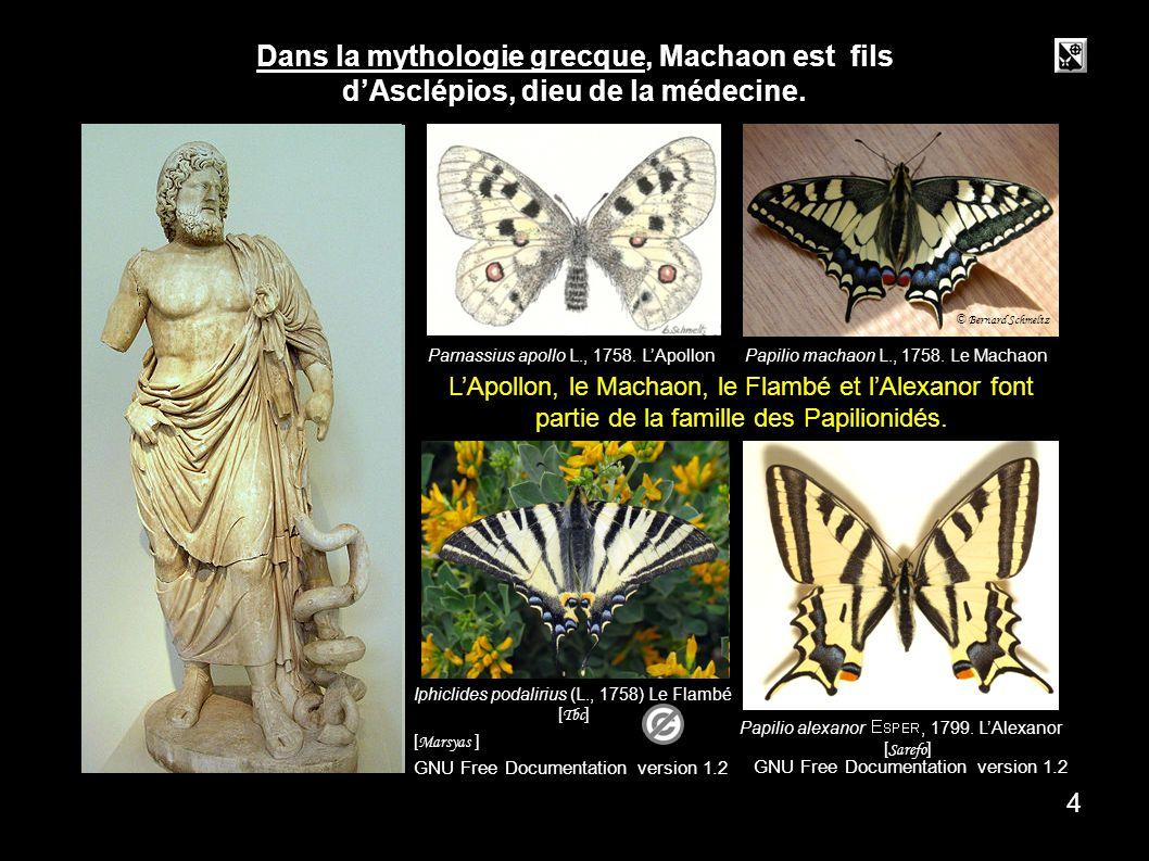 asclépios Asclépios 4 Parnassius apollo L., 1758.LApollon Papilio machaon L., 1758.