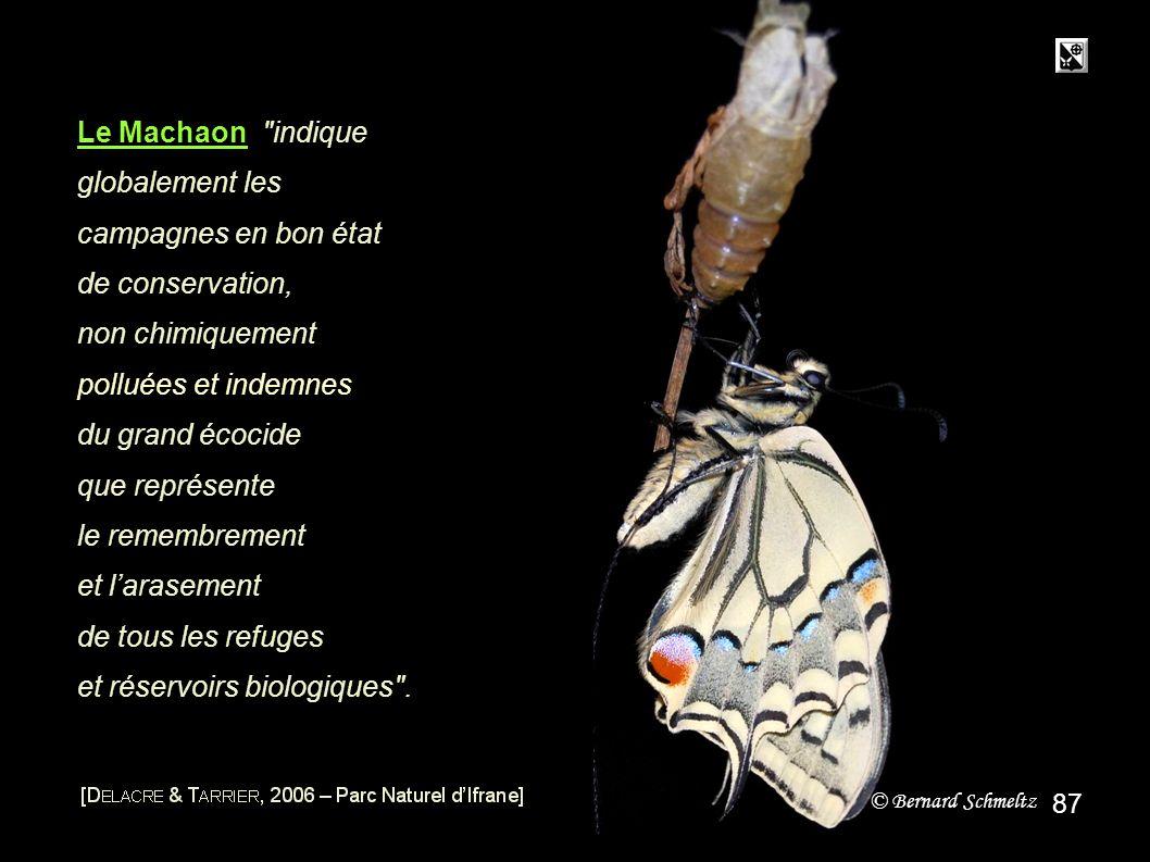 Parasite et destructeur Au lieu du papillon
