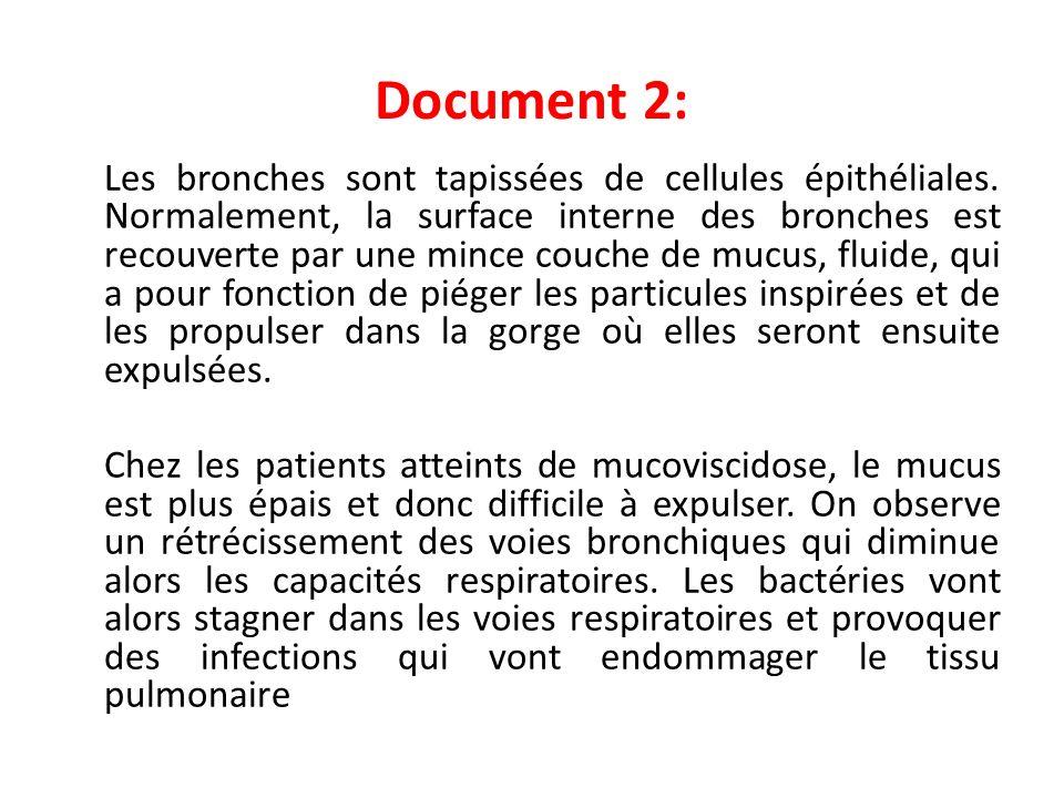Document 2: Les bronches sont tapissées de cellules épithéliales. Normalement, la surface interne des bronches est recouverte par une mince couche de