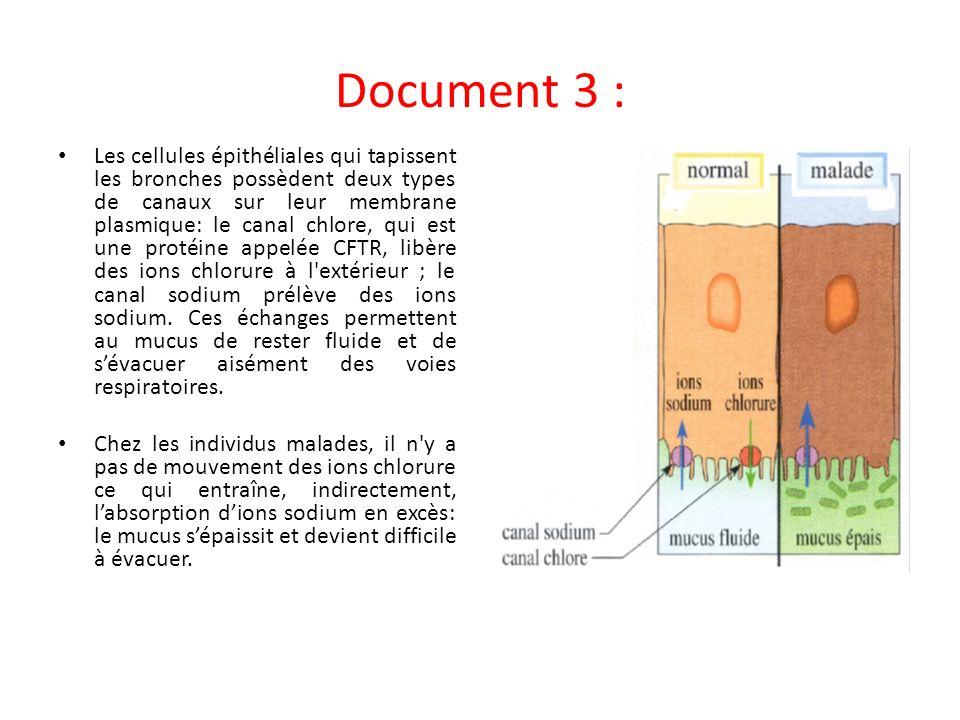 Document 3 : Les cellules épithéliales qui tapissent les bronches possèdent deux types de canaux sur leur membrane plasmique: le canal chlore, qui est