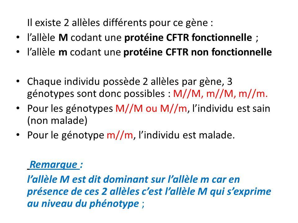 Il existe 2 allèles différents pour ce gène : lallèle M codant une protéine CFTR fonctionnelle ; lallèle m codant une protéine CFTR non fonctionnelle