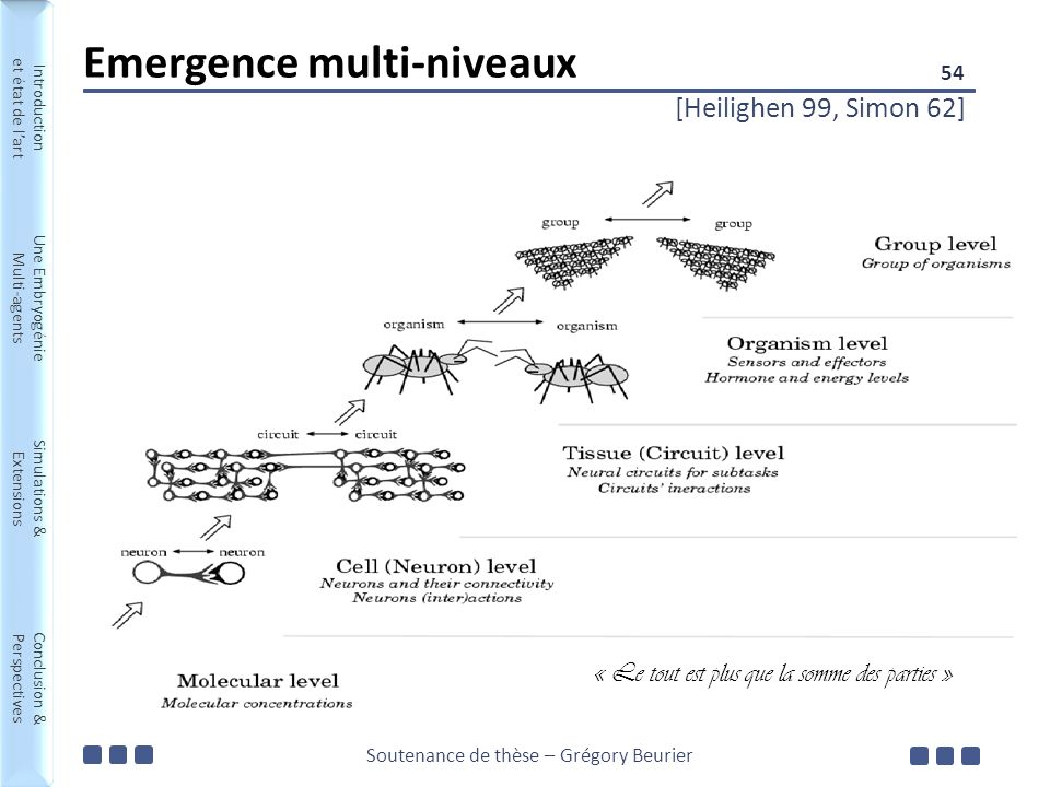 Soutenance de thèse – Grégory Beurier Introduction et état de lart Une Embryogénie Multi-agents Simulations & Extensions Conclusion & Perspectives Introduction et état de lart Une Embryogénie Multi-agents Simulations & Extensions Conclusion & Perspectives Emergence multi-niveaux [Heilighen 99, Simon 62] 54 « Le tout est plus que la somme des parties »