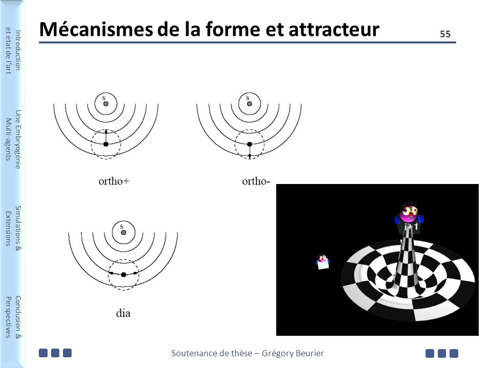 Soutenance de thèse – Grégory Beurier Introduction et état de lart Une Embryogénie Multi-agents Simulations & Extensions Conclusion & Perspectives Introduction et état de lart Une Embryogénie Multi-agents Simulations & Extensions Conclusion & Perspectives Mécanismes de la forme et attracteur 55