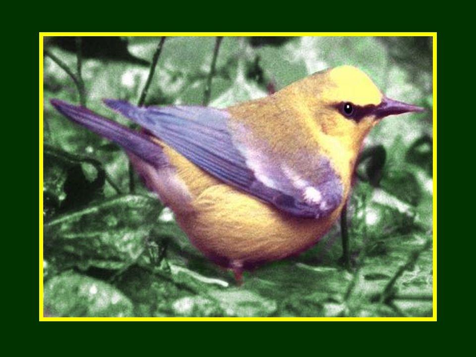 La «vérité» cest ce que nous risquons doublier parce que ça ne se voit pas. Un beau physique sans une belle âme est comme un bel oiseau sans ailes.