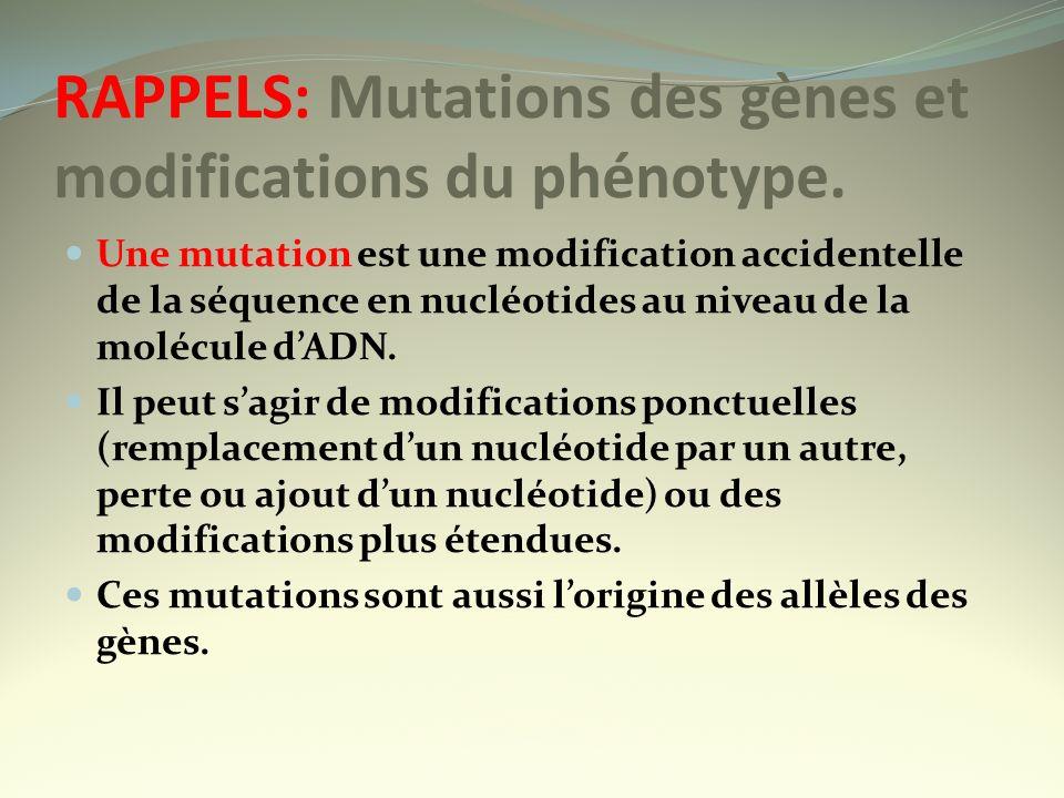 RAPPELS: Mutations des gènes et modifications du phénotype. Une mutation est une modification accidentelle de la séquence en nucléotides au niveau de