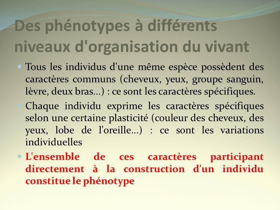 Le phénotype peut se définir à différentes échelles : macroscopique, cellulaire et moléculaire Le phénotype peut se définir à différentes échelles : macroscopique, cellulaire et moléculaire Le phénotype moléculaire : ensemble des caractéristiques biochimiques dun individu = séquences en acides aminés donc Protéines Le phénotype cellulaire : ensemble des caractéristiques des cellules dun organisme Le phénotype macroscopique : ensemble des caractères morphologiques dun individu (couleur de la peau, des yeux, des cheveux....)