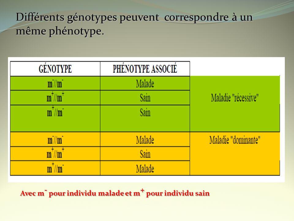 Différents génotypes peuvent correspondre à un même phénotype. Avec m - pour individu malade et m + pour individu sain