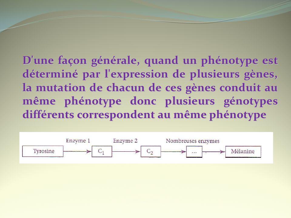 D'une façon générale, quand un phénotype est déterminé par l'expression de plusieurs gènes, la mutation de chacun de ces gènes conduit au même phénoty