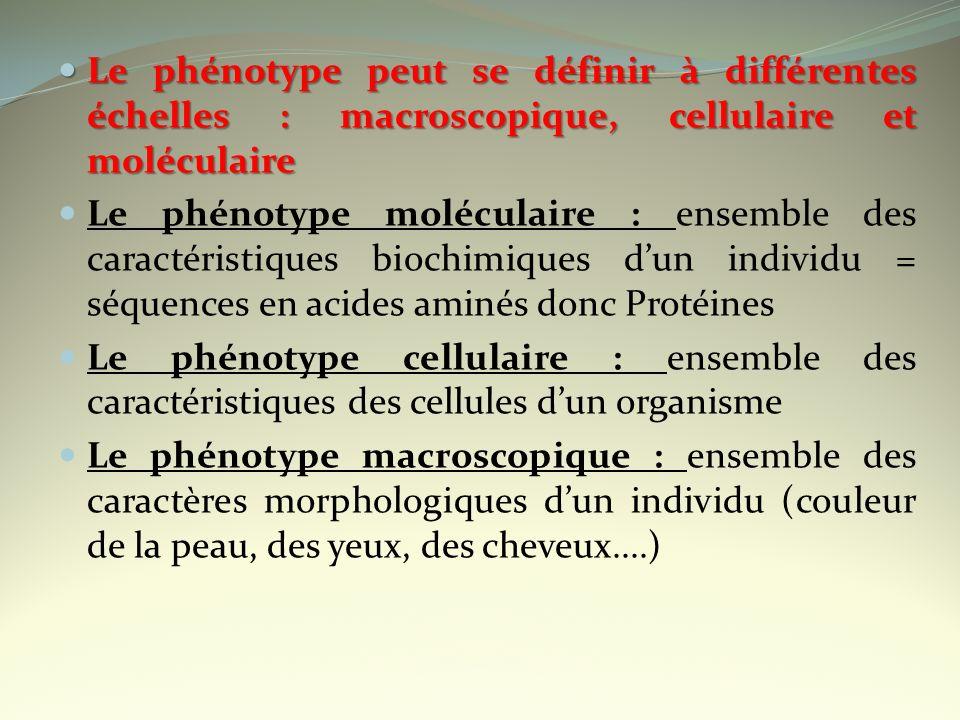 Le phénotype peut se définir à différentes échelles : macroscopique, cellulaire et moléculaire Le phénotype peut se définir à différentes échelles : m
