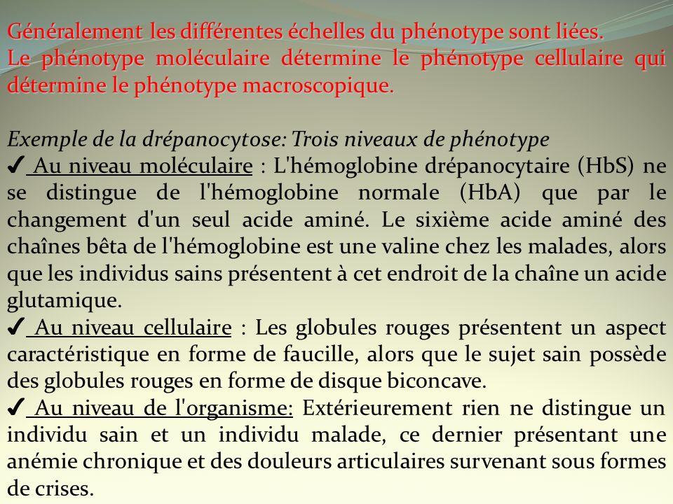 Généralement les différentes échelles du phénotype sont liées. Le phénotype moléculaire détermine le phénotype cellulaire qui détermine le phénotype m
