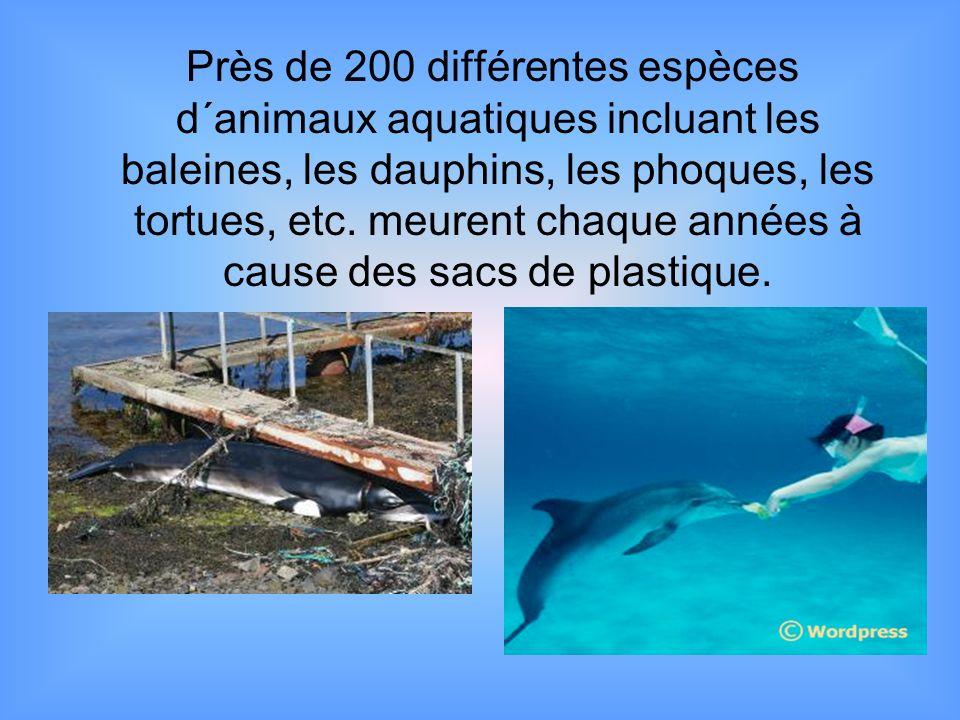 Près de 200 différentes espèces d´animaux aquatiques incluant les baleines, les dauphins, les phoques, les tortues, etc. meurent chaque années à cause