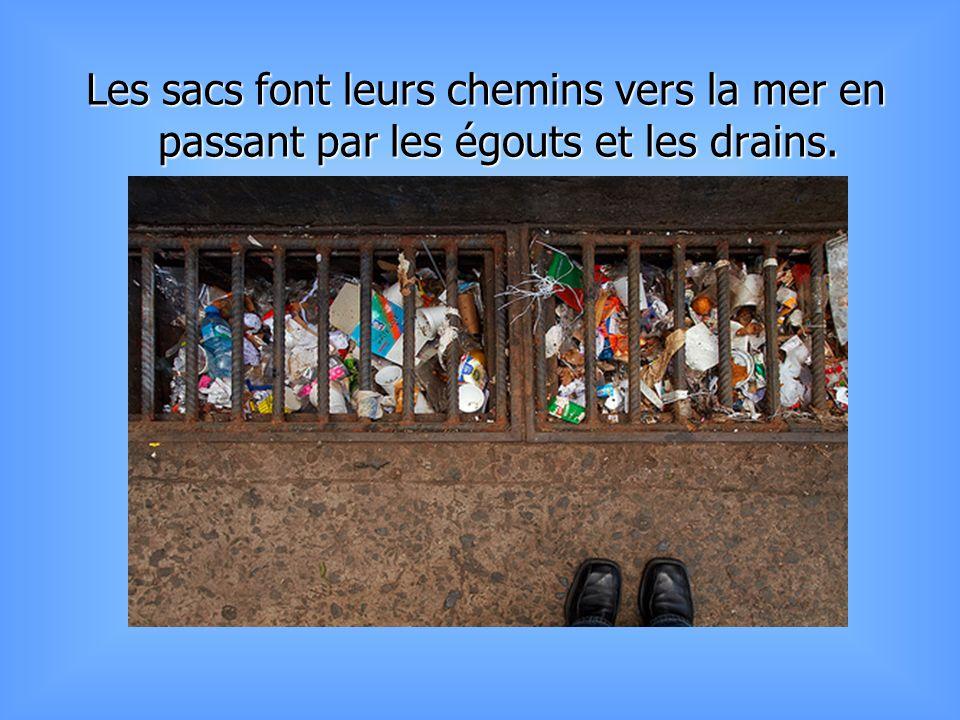 Le Canada, Israël, l´Inde, Botswana, Kenya, Tanzanie, l´Afrique du Sud, Taiwan et Singapour ont tous banni, ou sont en voie de le faire, les sacs de plastique.