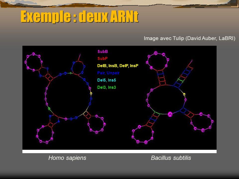 Exemple : deux ARNt Homo sapiensBacillus subtilis Image avec Tulip (David Auber, LaBRI) SubB SubP DelB, InsB, DelP, InsP Pair, Unpair Del5, Ins5 Del3,