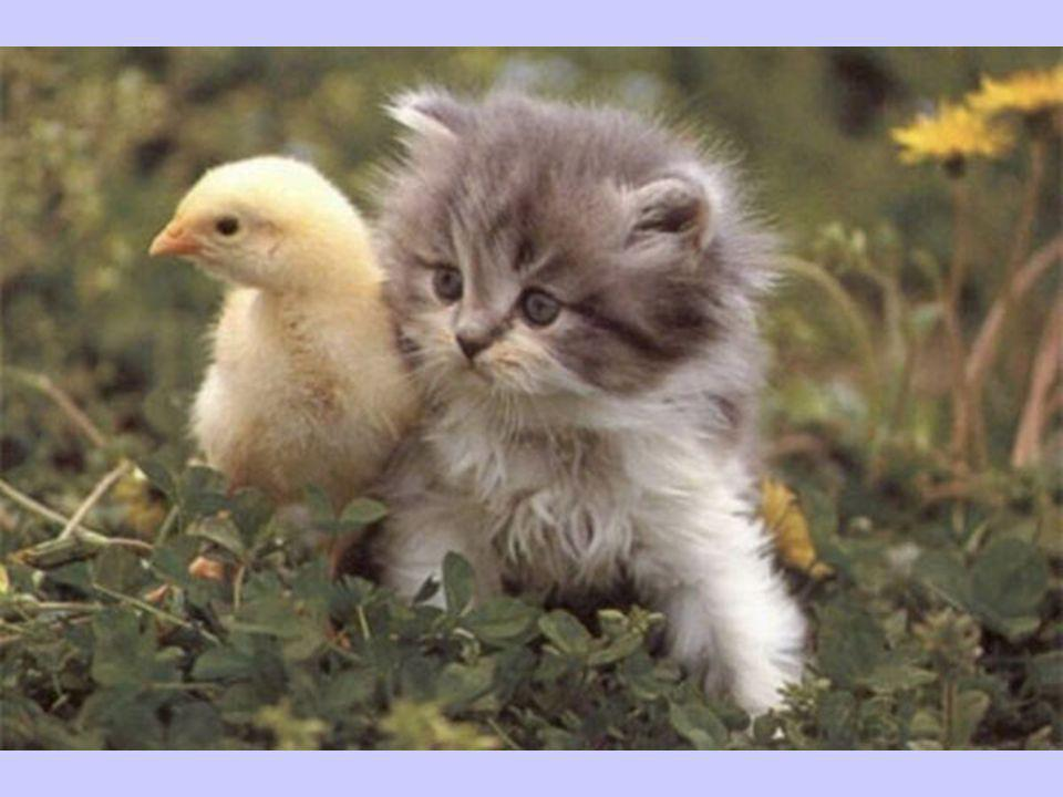 Les anges existent mais des fois ils n ont pas d ailes... Nous les appelons alors « amis ».