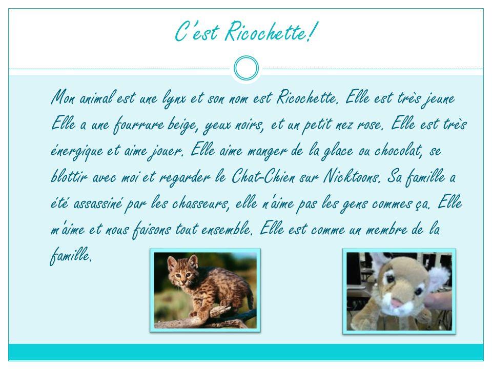 Cest Ricochette! Mon animal est une lynx et son nom est Ricochette. Elle est très jeune Elle a une fourrure beige, yeux noirs, et un petit nez rose. E