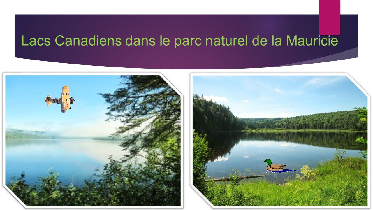 Lacs Canadiens dans le parc naturel de la Mauricie