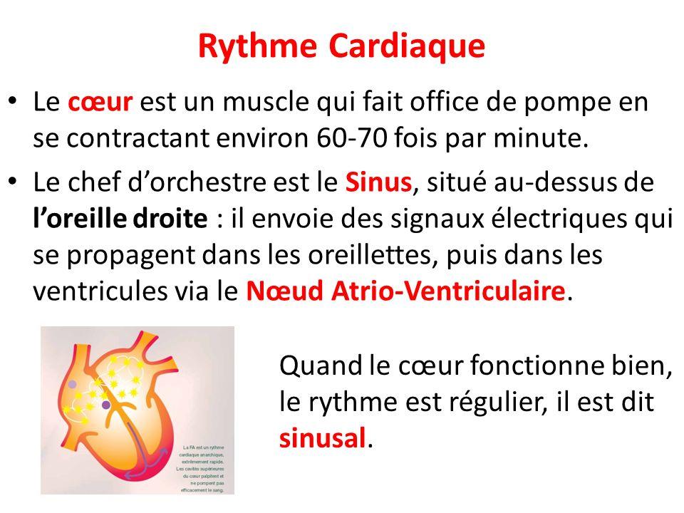 Rythme Cardiaque Le cœur est un muscle qui fait office de pompe en se contractant environ 60-70 fois par minute. Le chef dorchestre est le Sinus, situ