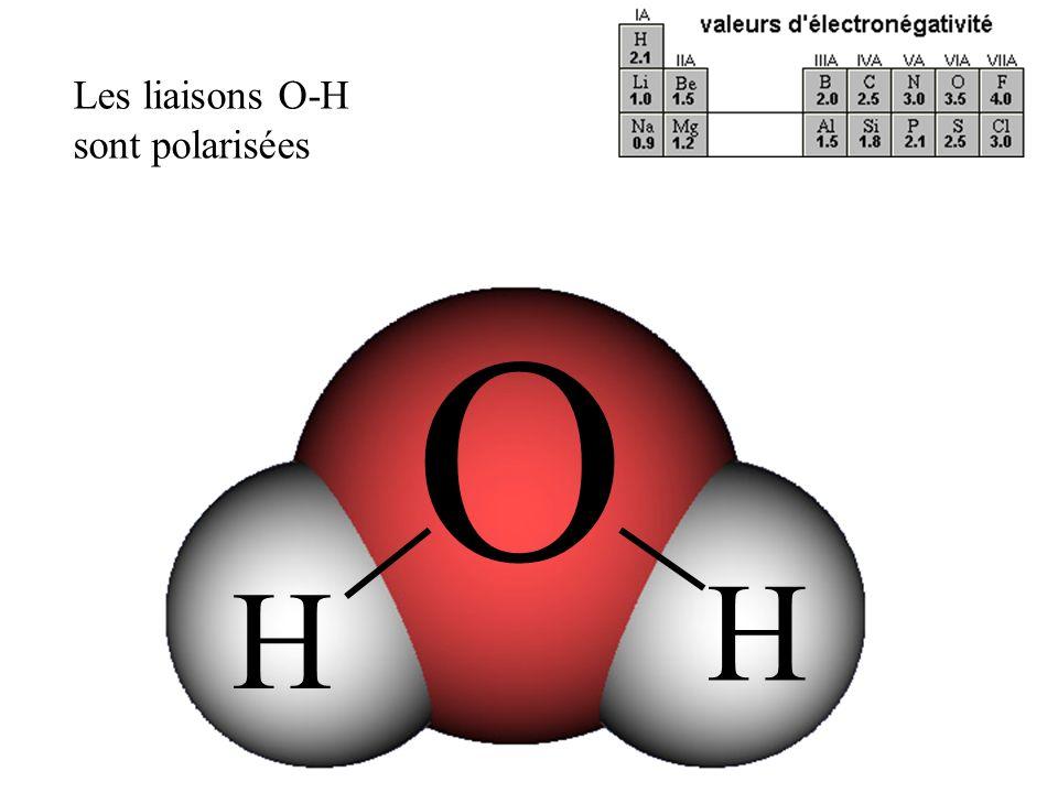 O H H Les liaisons O-H sont polarisées