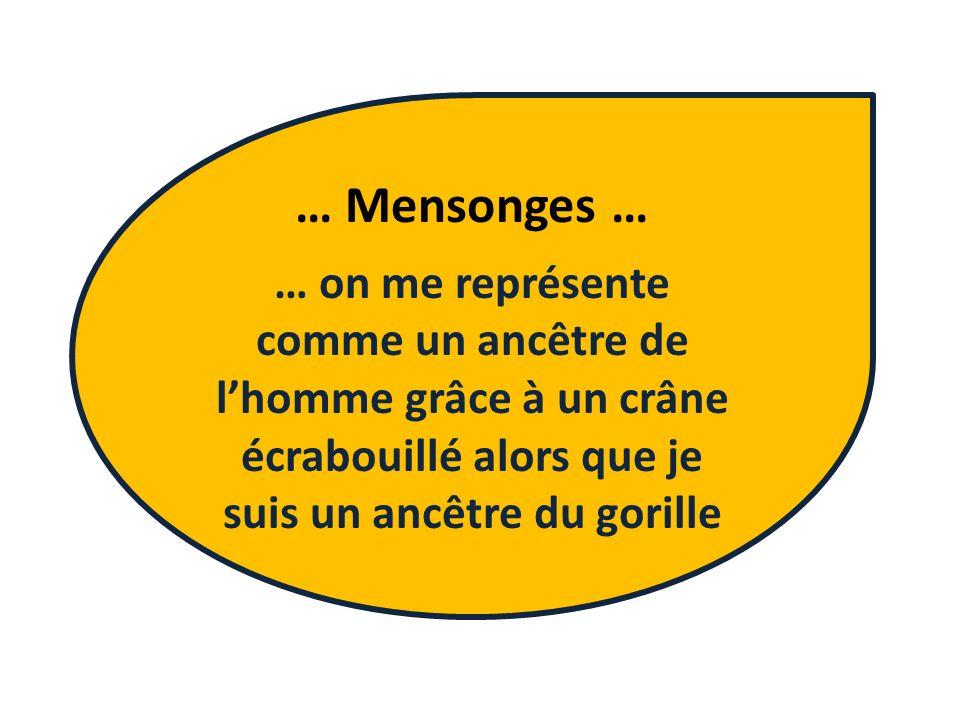 … Mensonges … … on me représente comme un ancêtre de lhomme grâce à un crâne écrabouillé alors que je suis un ancêtre du gorille