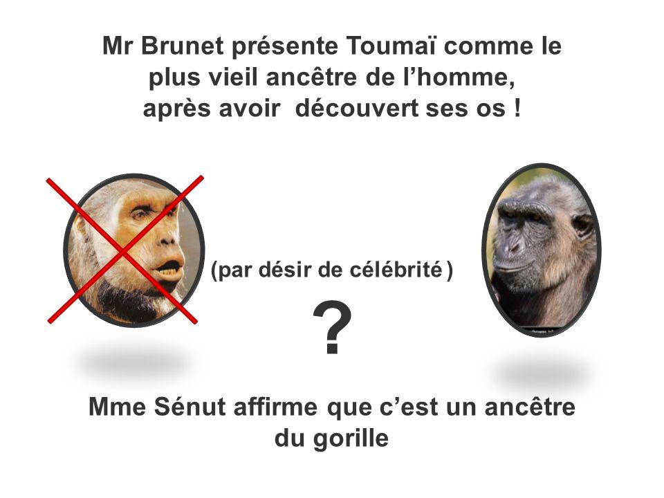 Mr Brunet présente Toumaï comme le plus vieil ancêtre de lhomme, après avoir découvert ses os ! (par désir de célébrité ) ? Mme Sénut affirme que cest
