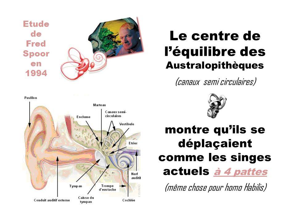 Etude de Fred Spoor en 1994 Le centre de léquilibre des Australopithèques (canaux semi circulaires) montre quils se déplaçaient comme les singes actue