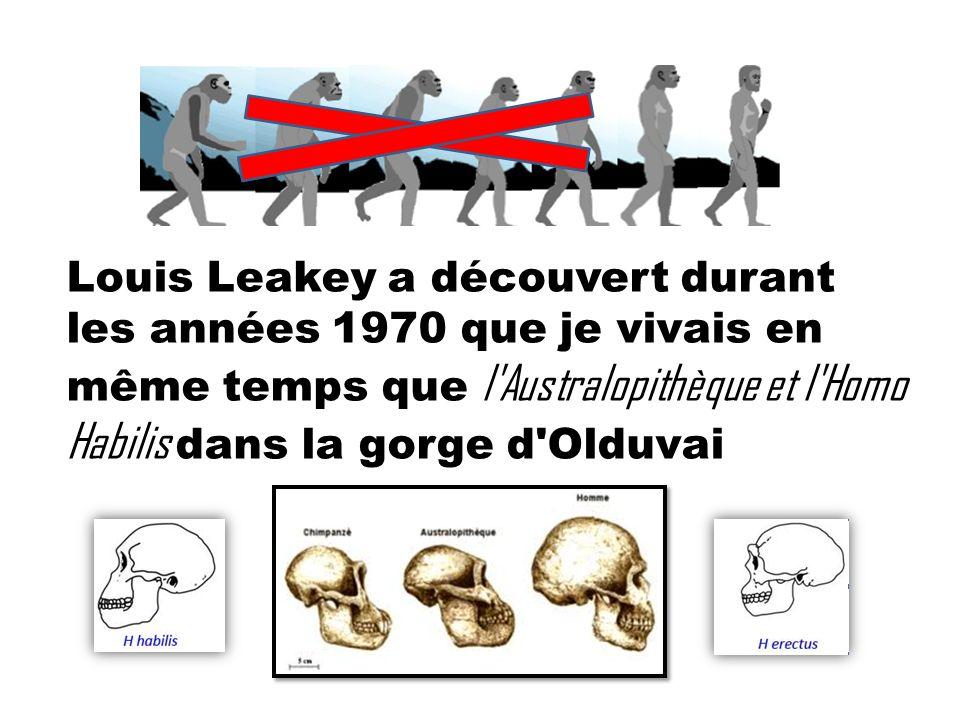 Louis Leakey a découvert durant les années 1970 que je vivais en même temps que l'Australopithèque et l'Homo Habilis dans la gorge d'Olduvai