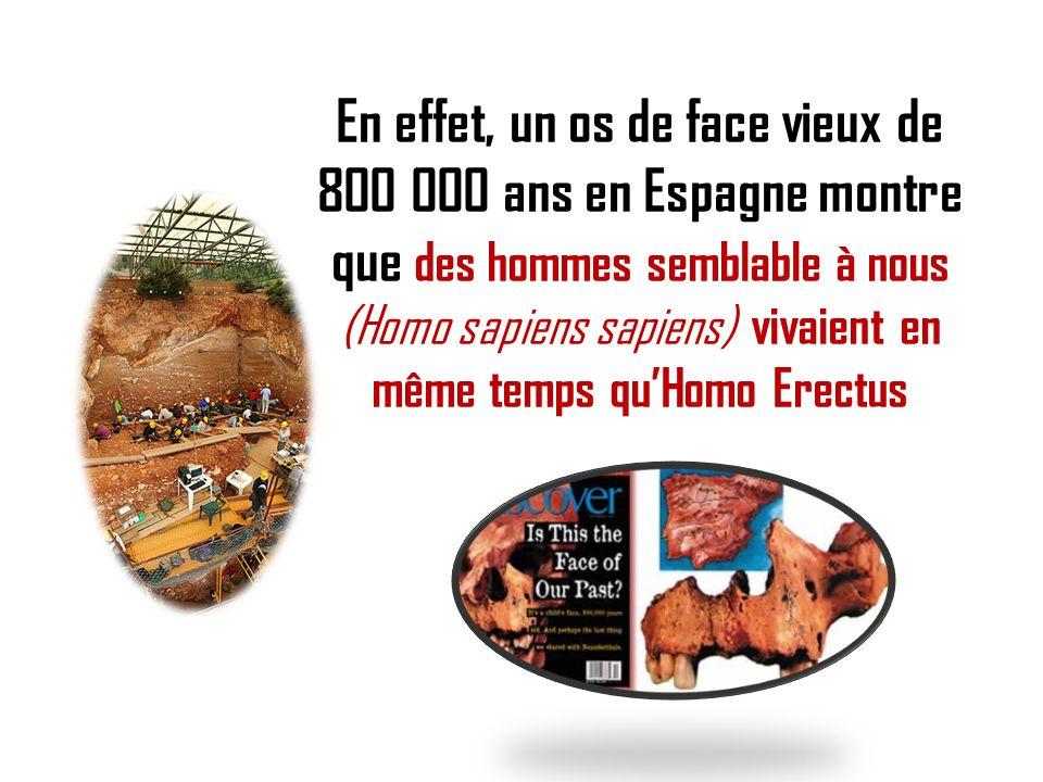 En effet, un os de face vieux de 800 000 ans en Espagne montre que des hommes semblable à nous (Homo sapiens sapiens) vivaient en même temps quHomo Er