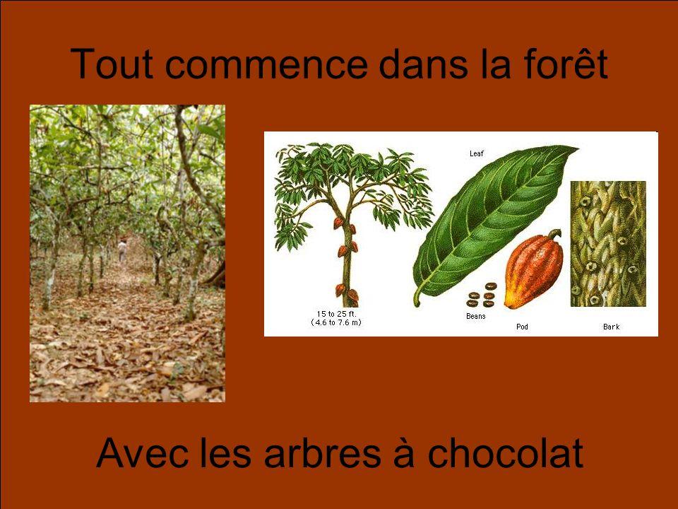 Tout commence dans la forêt Avec les arbres à chocolat