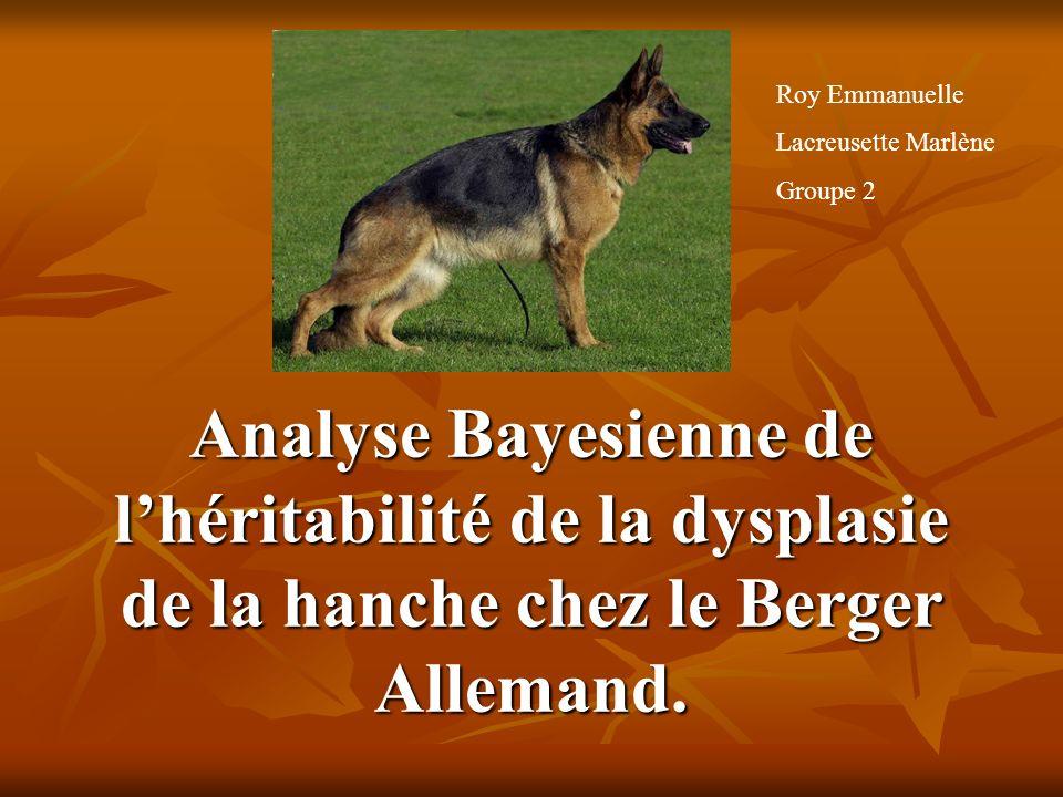 Analyse Bayesienne de lhéritabilité de la dysplasie de la hanche chez le Berger Allemand. Roy Emmanuelle Lacreusette Marlène Groupe 2