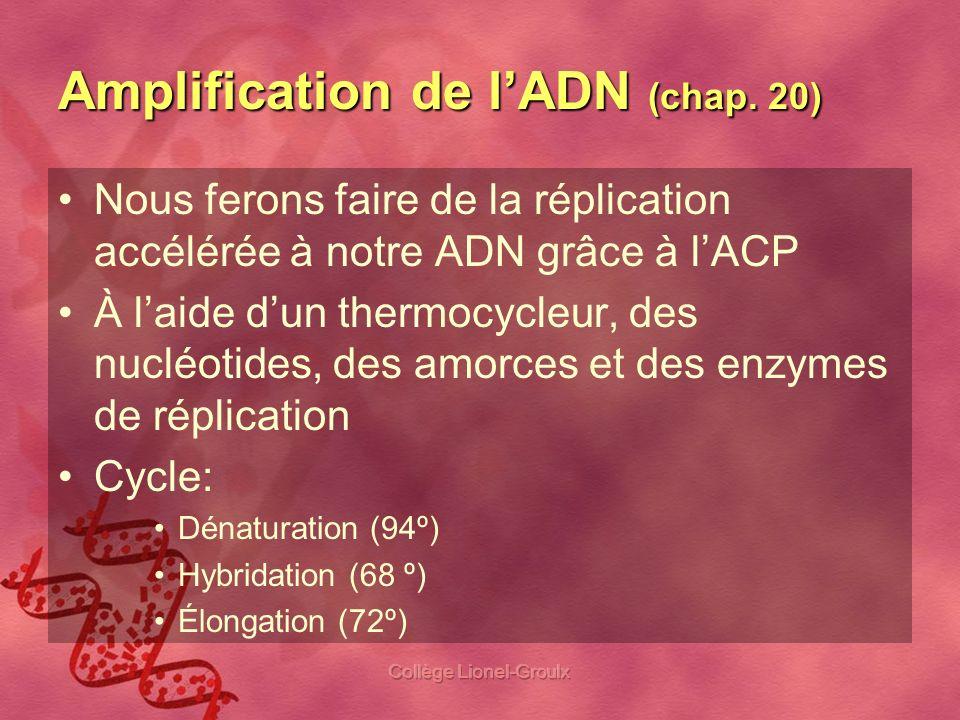 Collège Lionel-Groulx Amplification de lADN (chap. 20) Nous ferons faire de la réplication accélérée à notre ADN grâce à lACP À laide dun thermocycleu
