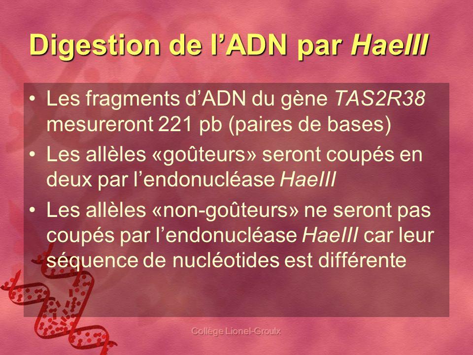 Collège Lionel-Groulx Digestion de lADN par HaeIII Les fragments dADN du gène TAS2R38 mesureront 221 pb (paires de bases) Les allèles «goûteurs» seron