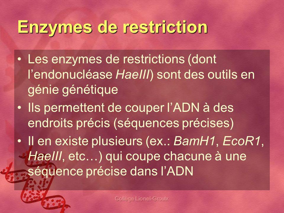 Collège Lionel-Groulx Enzymes de restriction Les enzymes de restrictions (dont lendonucléase HaeIII) sont des outils en génie génétique Ils permettent