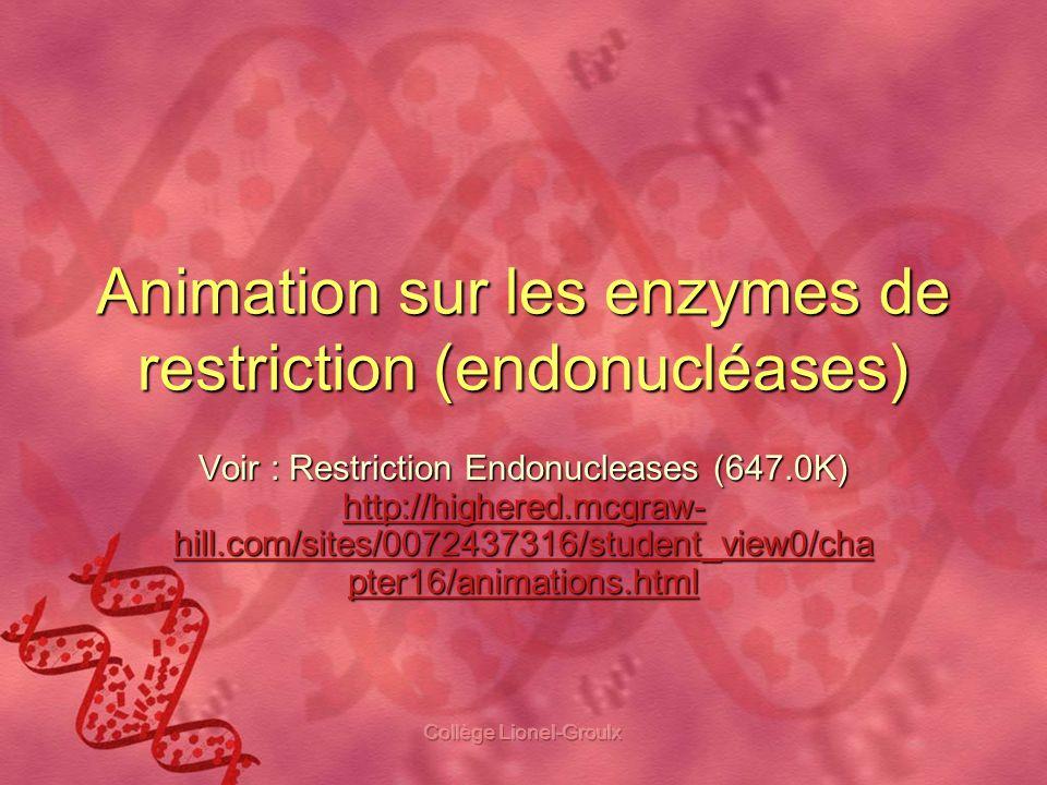 Collège Lionel-Groulx Animation sur les enzymes de restriction (endonucléases) Voir : Restriction Endonucleases (647.0K) http://highered.mcgraw- hill.